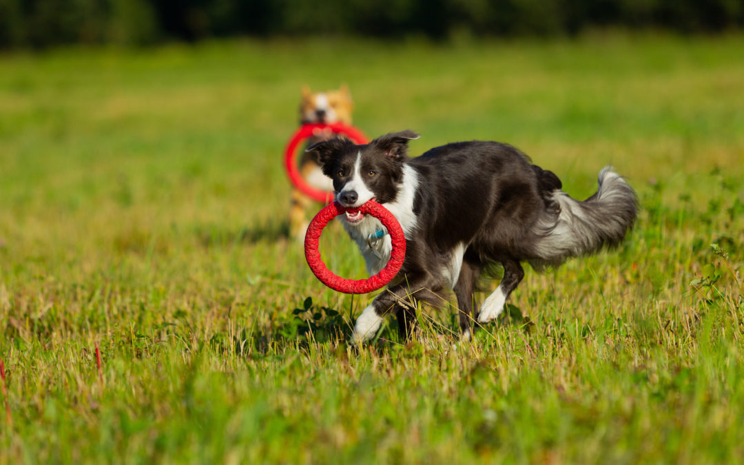 Healthy Exercise Inspiration for Your Puppy